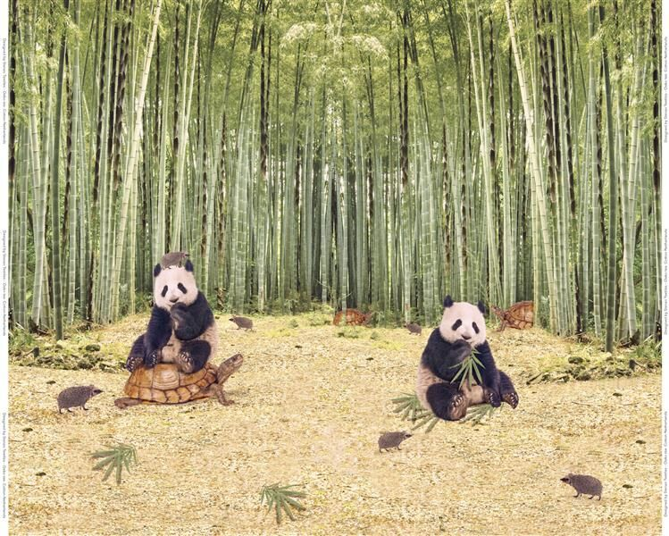 Stenzo Jersey Stoff Pandabären, Rapport